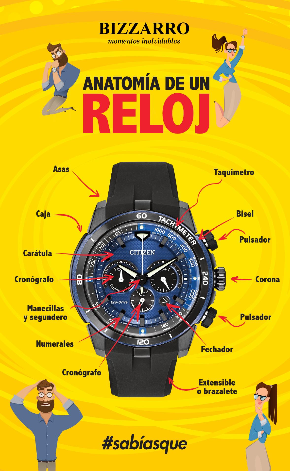Anatomía básica de un reloj