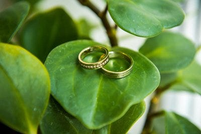 Argollas de matrimonio en plantas